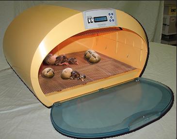 Incubatrici it for Incubatrice per tartarughe
